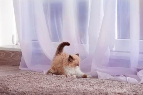 カーテンにじゃれて遊ぶ子猫