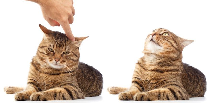 喧嘩を止める人の手と二匹の猫