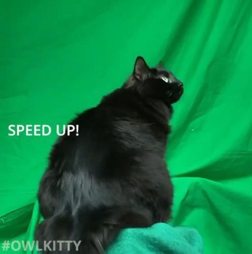 台座に座る猫