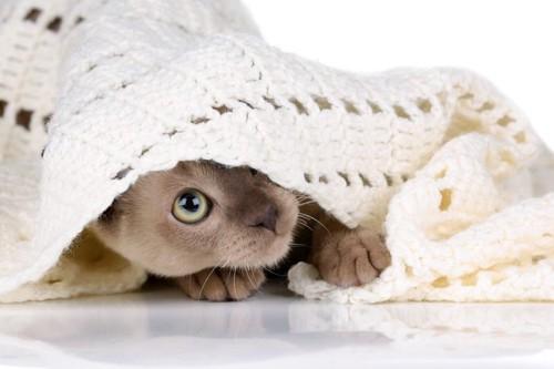 布をかぶった猫