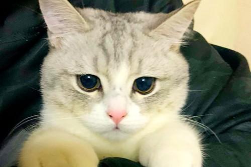飼い主さんに抱かれた猫