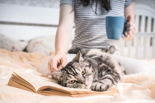 本を枕に寝るアメショー