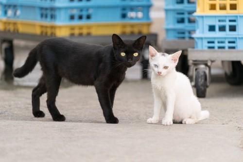 白猫の子猫に寄り添う黒猫