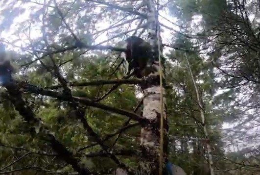木に引っ掛かかるかのようなピカソ