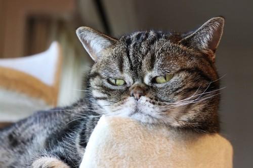 ふてくされた猫