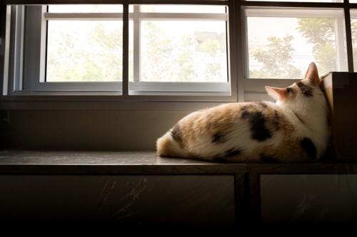 窓辺で寝る三毛猫の背中