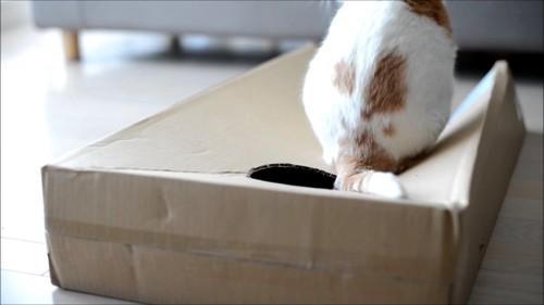 箱から出た猫の後姿