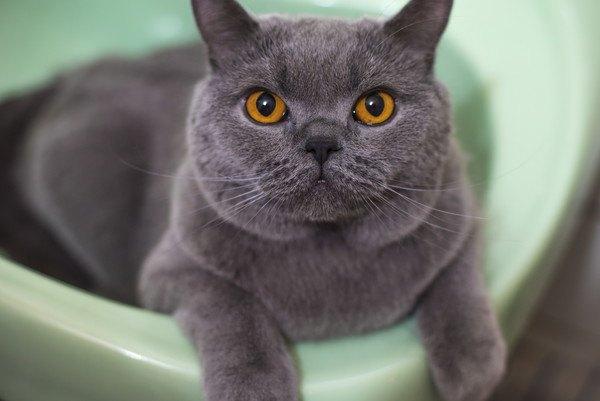 灰色の猫と緑色のトイレ