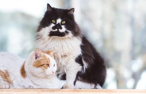 不思議な柄の二匹の猫