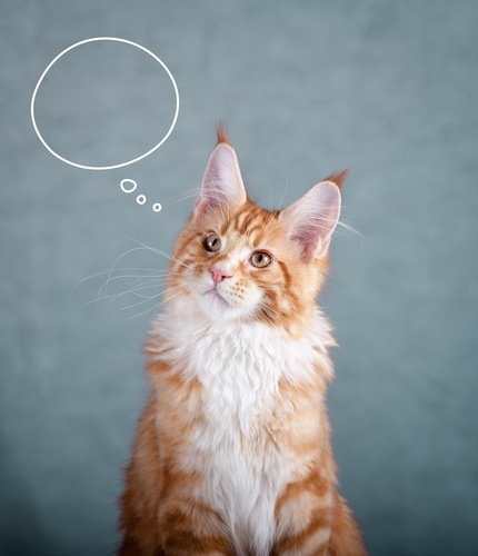 考え事をしている猫