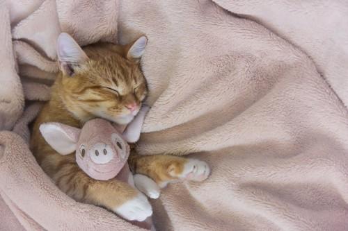 ぬいぐるみを抱いて毛布の上で眠る猫