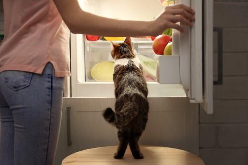 飼い主と冷蔵庫をのぞく猫