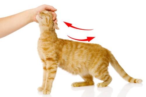 猫を撫でる方向
