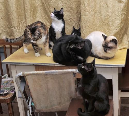 たくさんの猫達
