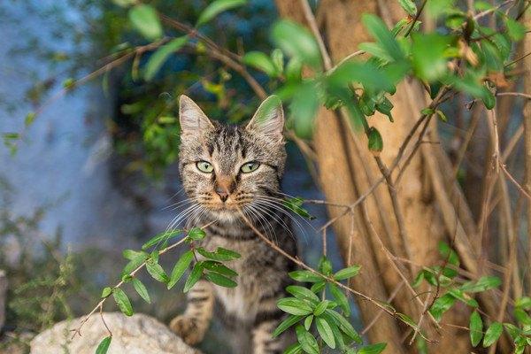 外に出ているキジ猫