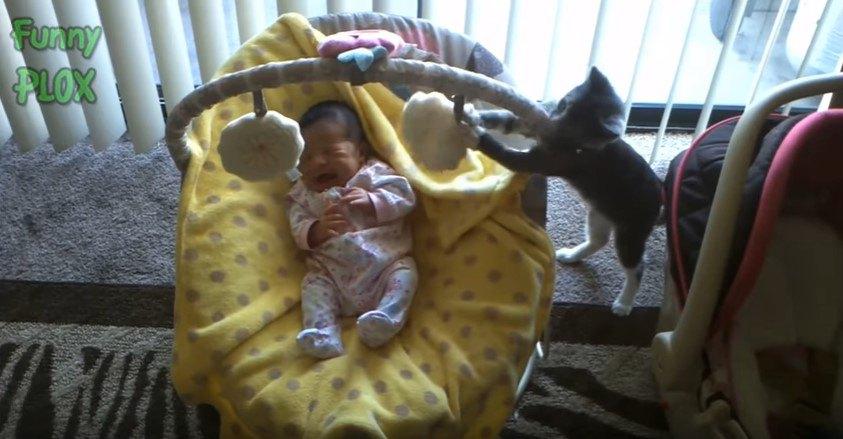 揺りかごの乳児
