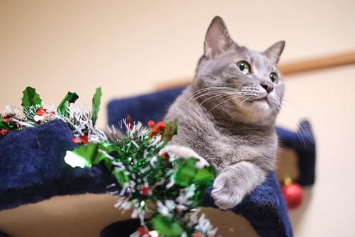 クリスマスリースと猫
