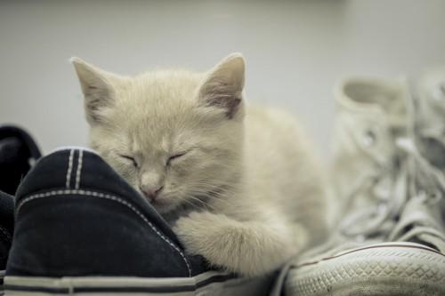 靴に寄り添う猫