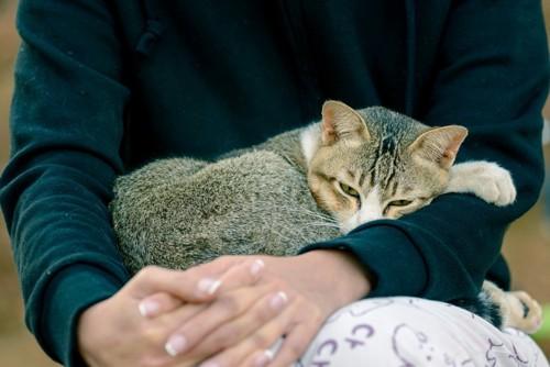 人の手の中の猫
