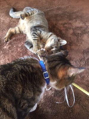 猫が2匹で写っている