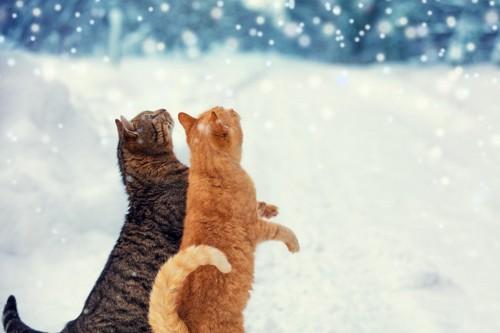 雪の中立ちあがる猫