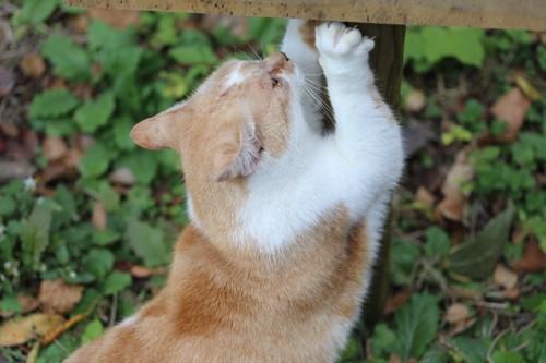 野良猫の爪とぎ