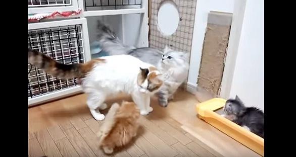 母猫に付いてまわる子猫