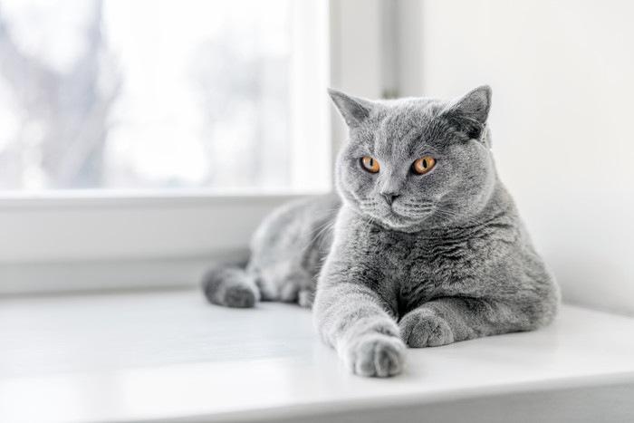 窓際でくつろぐ猫