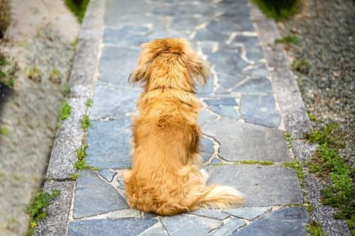 飼い主を待つ犬
