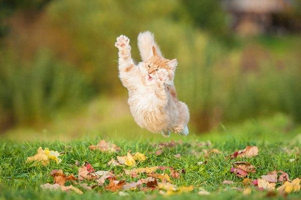 草の上でジャンプした一瞬を撮った猫の写真