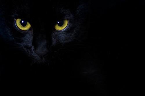 暗がりで光る猫の目