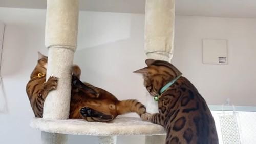 柱を蹴る猫と緑色の首輪の猫