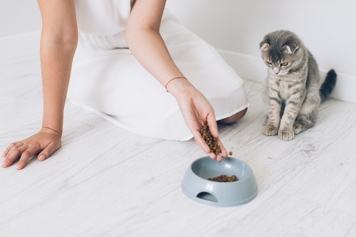 食事を見つめる猫