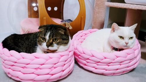 黒系の猫と白猫