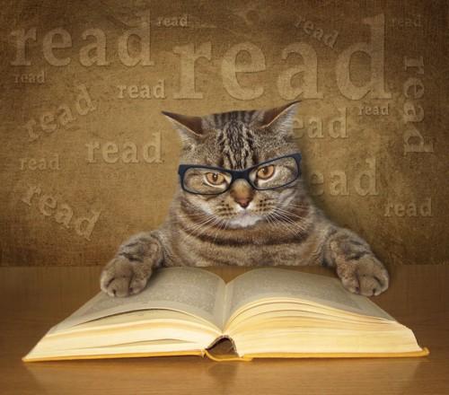 本を読む猫
