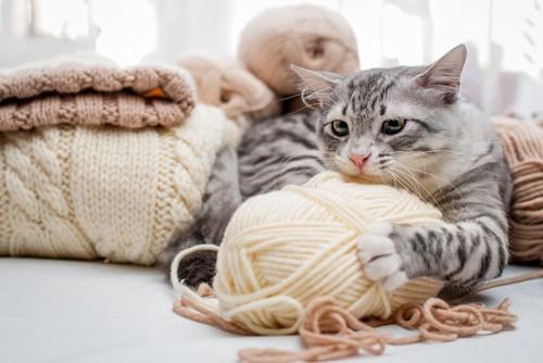 毛糸玉を抱えている猫