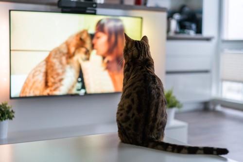 テーブルの上に座ってテレビを見る猫