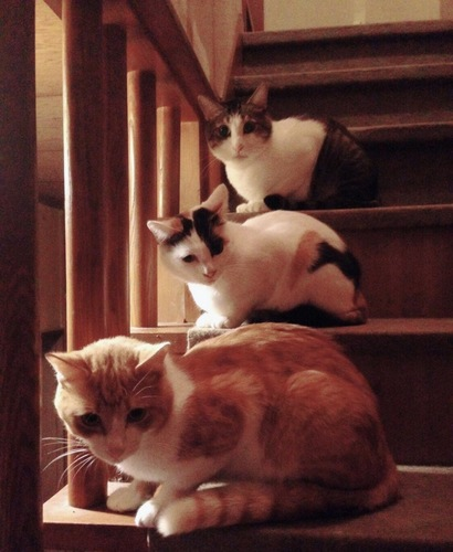 階段に座っている猫3匹