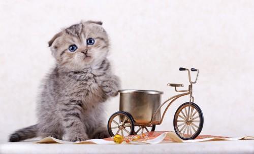 子猫と自転車