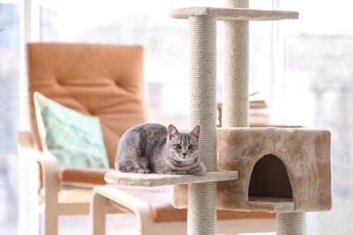 キャットタワーに乗ってくつろぐ猫