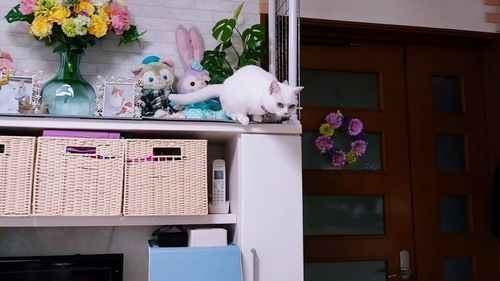 飛び降りようとする猫