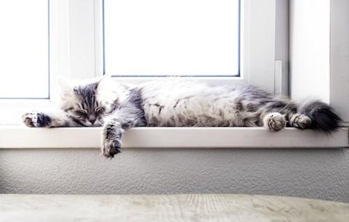 窓辺で日向ぼっこしている猫
