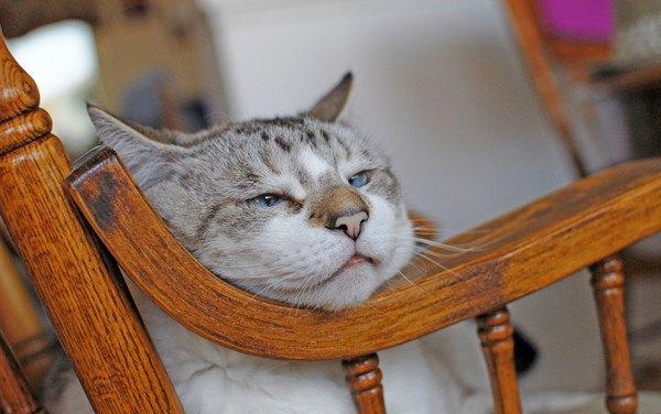 木のカーブに顎を載せて寝る猫