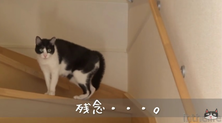 尻尾を下げて怯える猫