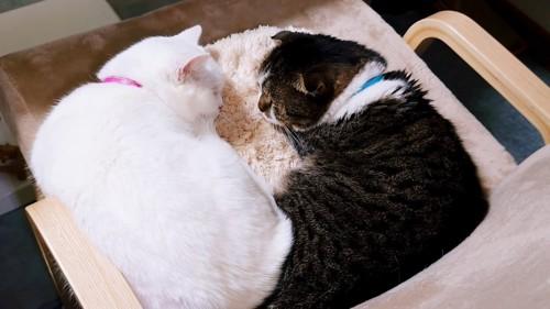 向かい合って寝る2匹の猫