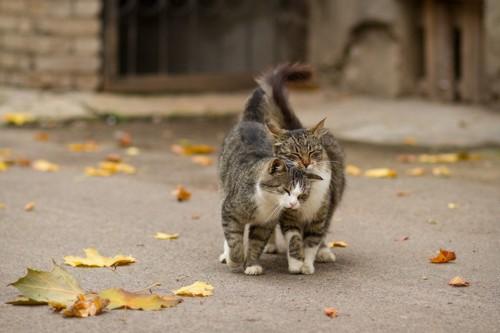 頭を擦り付ける2匹の猫