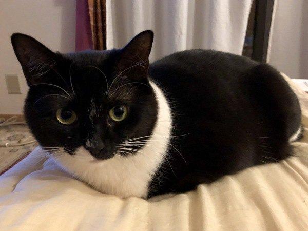 クッションの上で丸くなっている猫