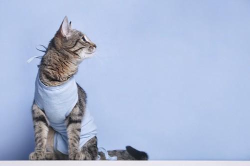 座って横を見る術後服を着た猫