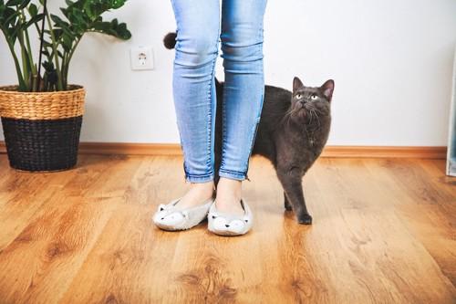 飼い主の足元に尻尾を上げて近づく猫
