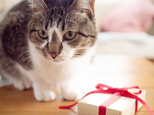 猫とプレゼントの箱